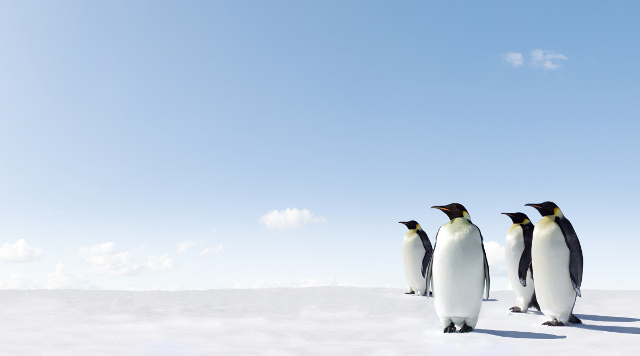 How Penguin 4.0 Has Changed SEO